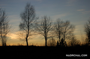 The Evening Trees