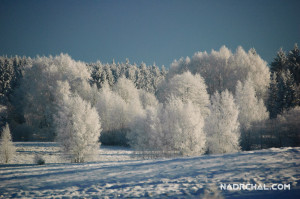 The Frozen Trees
