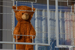 The Jailed Teddy Bear